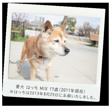 愛犬 はっち MIX 17歳(2012年現在)